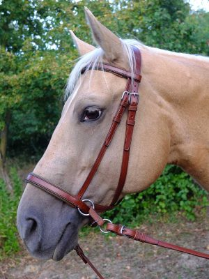 Testiera bitless personalizzata per cavallo con frontalino e capezzino con imbottitura e bordature colorate.