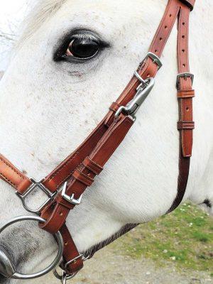 Dettaglio testiera-capezza convertibile con frontalino e capezzino con imbottitura per cavallo taglia Full.