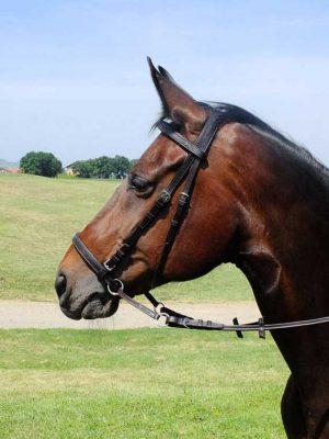 Testiera bitless con frontalino e capezzino con imbottitura realizzata per cavallo taglia Cob.