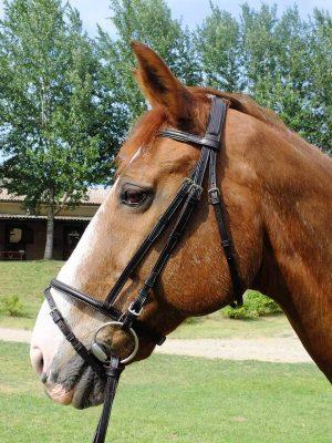 Testiera con capezzino con chiudibocca, sovracapo imbottito e frontalino bombati con accenti colorati per cavallo taglia Full.
