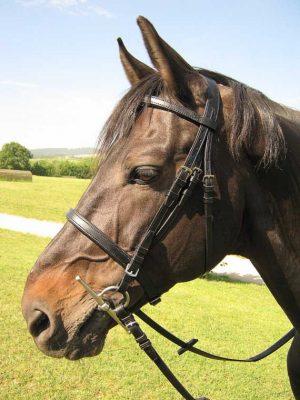 Testiera inglese con imbottiture per cavallo realizzata in taglia Full.