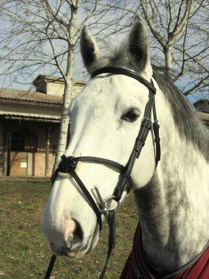 Testiera con capezzino messicano personalizzata per cavallo realizzata in taglia Full.